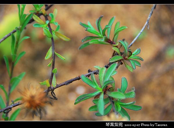 琴葉紫菀_07.jpg