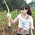20100923-烈嶼芋頭產業走出傳統農業新風貌