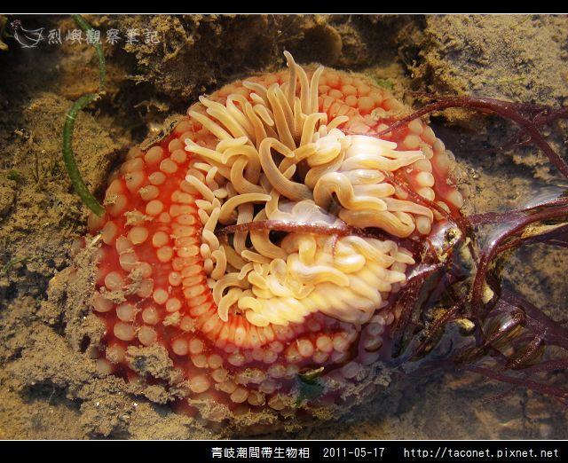 潮間帶生物_47.jpg