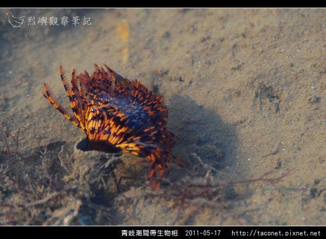 潮間帶生物_09.jpg