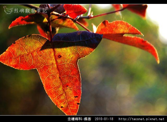 金縷梅科-楓香_21.jpg