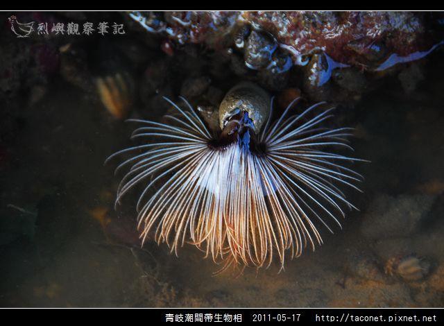 潮間帶生物_25.jpg