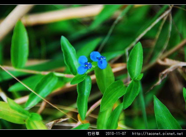 竹仔草_08.jpg