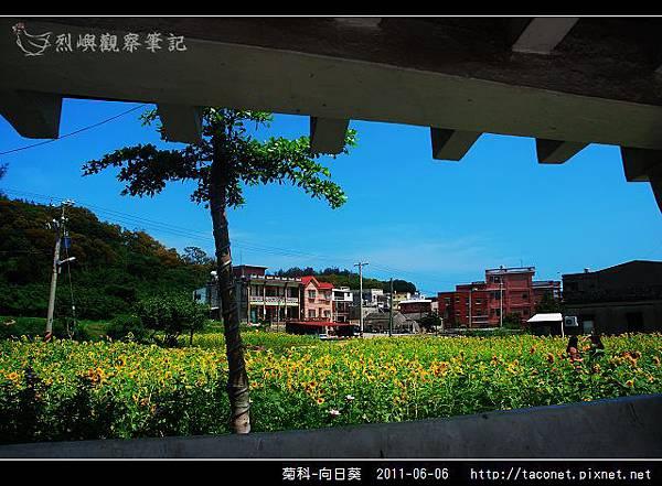 菊科-向日葵_09.jpg