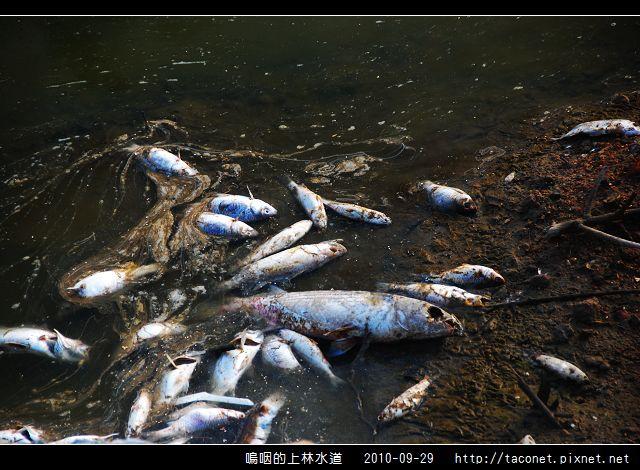 上林水道之死_09.jpg