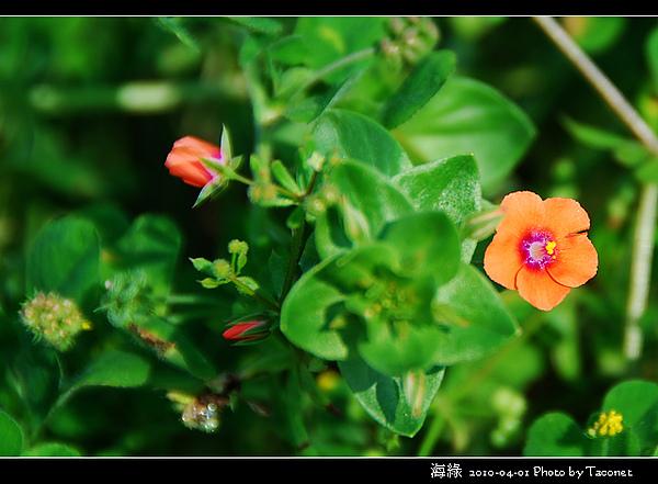 海綠_05.jpg