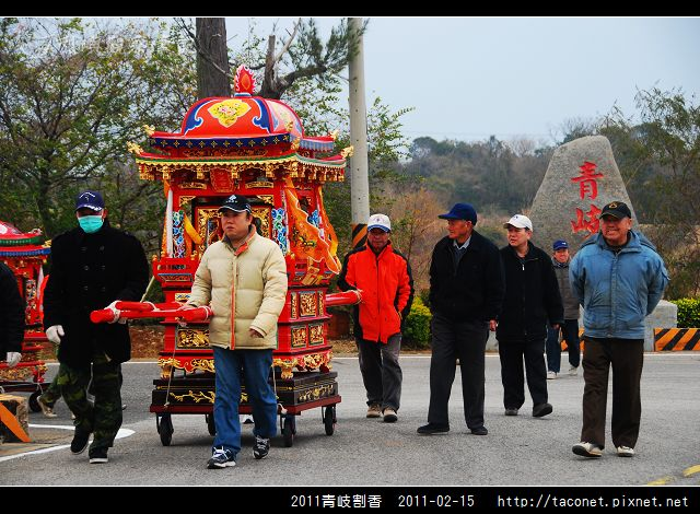 2011青岐割香_11.jpg