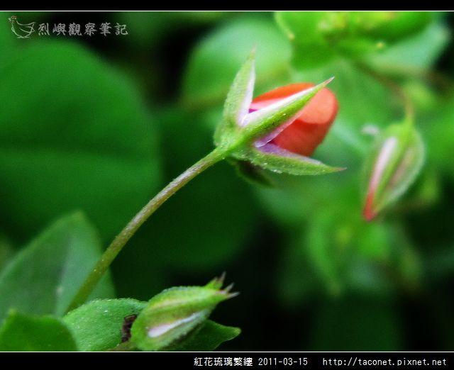 紅花琉璃繁縷-07.jpg