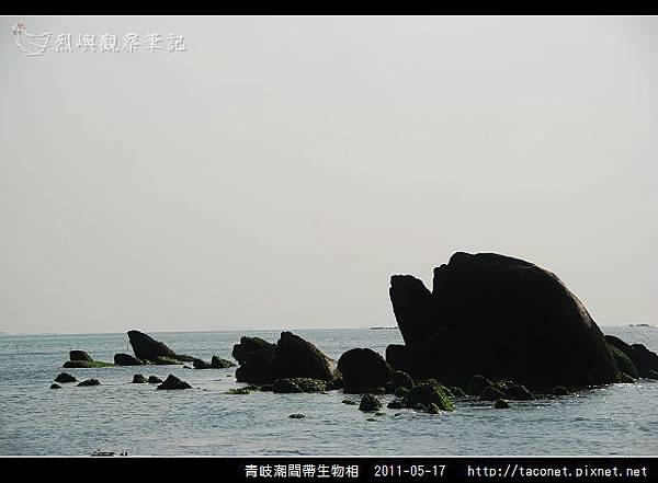 潮間帶生物_02.jpg
