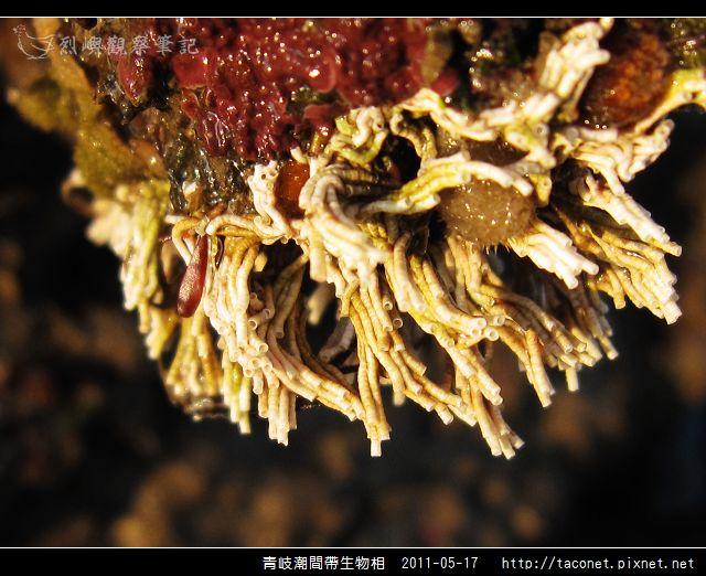 潮間帶生物_52.jpg