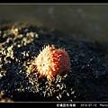 柑橘荔枝海綿-11.jpg