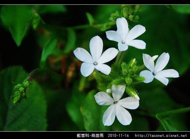 藍雪科-烏面馬_06.jpg