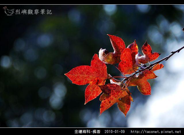 金縷梅科-楓香_29.jpg