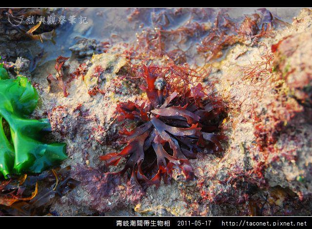 潮間帶生物_33.jpg