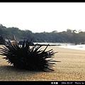 紫海膽_02.jpg