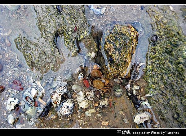 螃蟹有幾隻?s.jpg