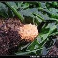 柑橘荔枝海綿_06.jpg