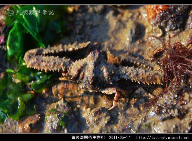 潮間帶生物_16.jpg