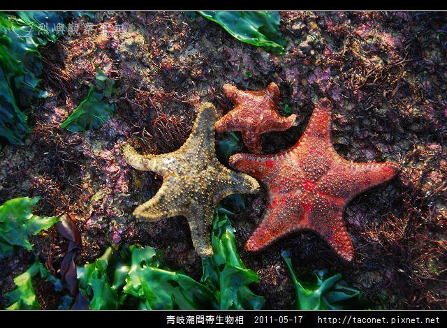 潮間帶生物_32.jpg