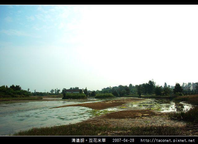 互花米草在清遠湖_10.jpg