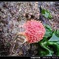 柑橘荔枝海綿_07.jpg