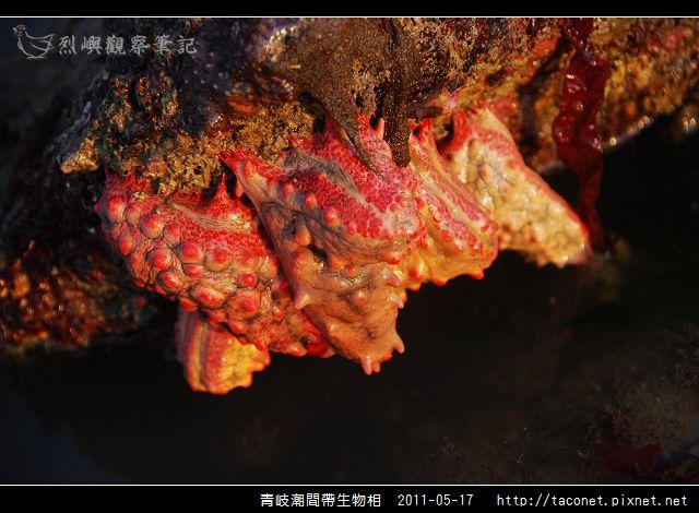 潮間帶生物_37.jpg