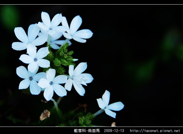 藍雪科-烏面馬_09.jpg