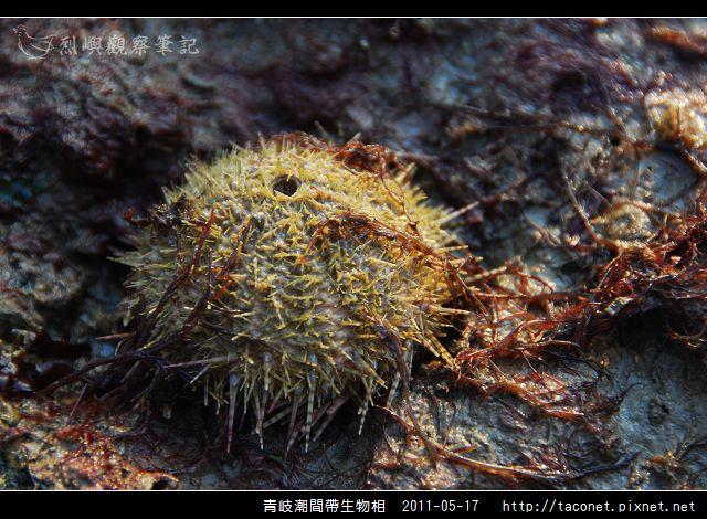 潮間帶生物_34.jpg