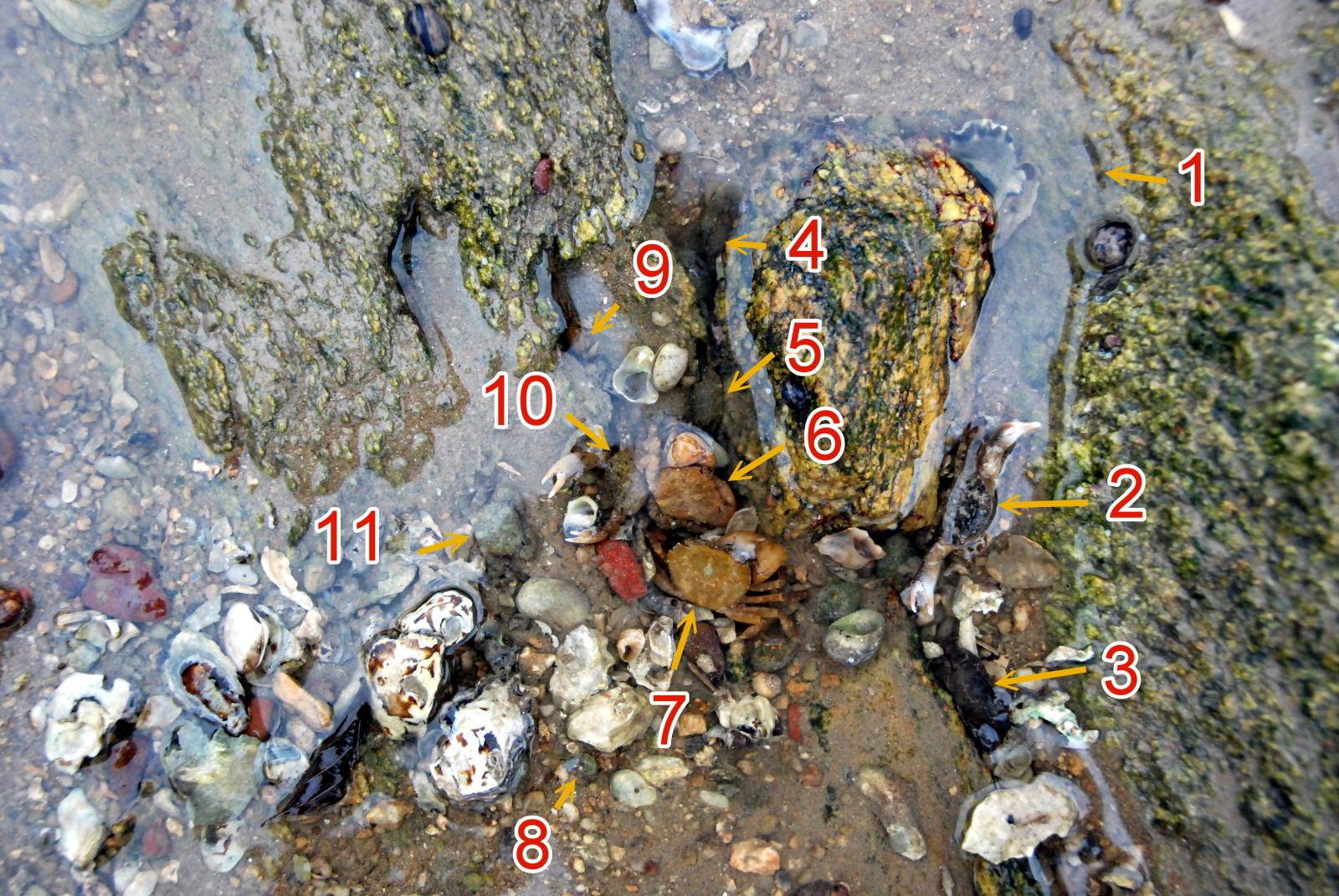 螃蟹有幾隻m.jpg
