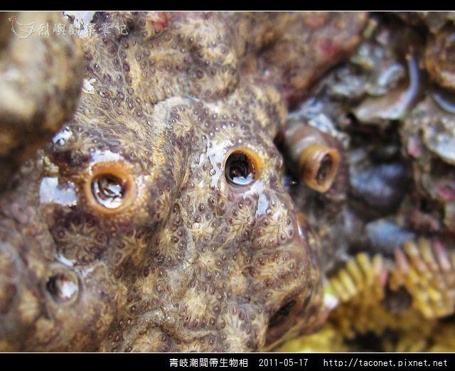 潮間帶生物_45.jpg