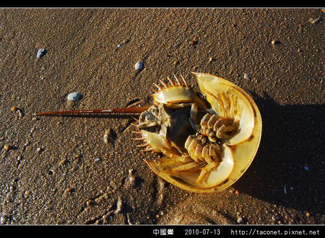 中國鱟_06.jpg