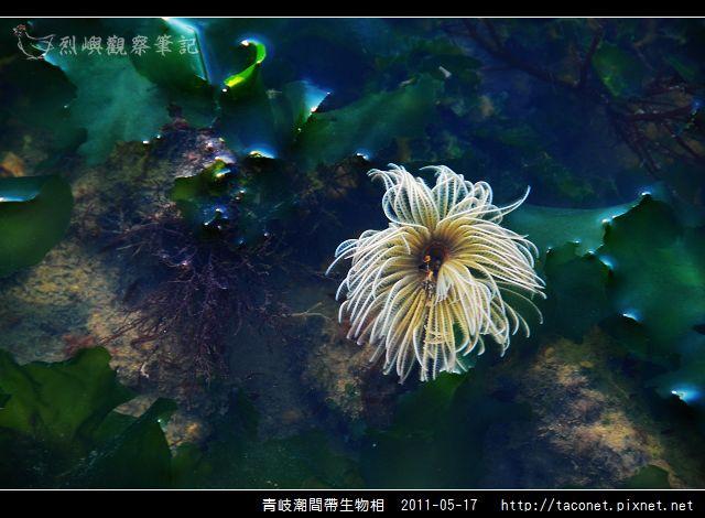 潮間帶生物_14.jpg