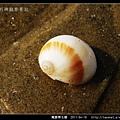 寬腰帶玉螺_03.jpg