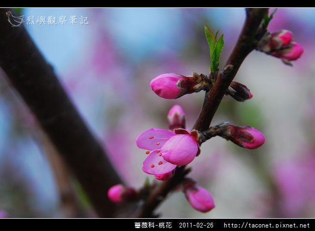 薔薇科-桃花_06.jpg