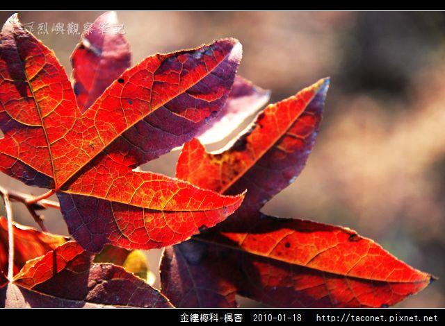 金縷梅科-楓香_23.jpg