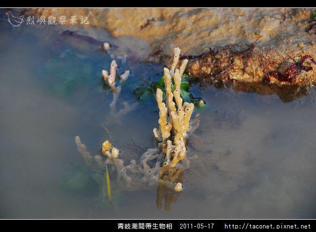 潮間帶生物_28.jpg