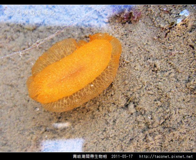 潮間帶生物_54.jpg