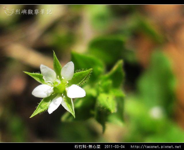 石竹科-無心菜_06.jpg