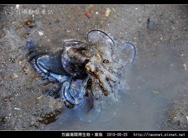 章魚_05.jpg