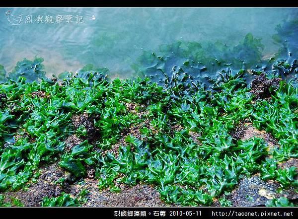 石蓴_05.jpg