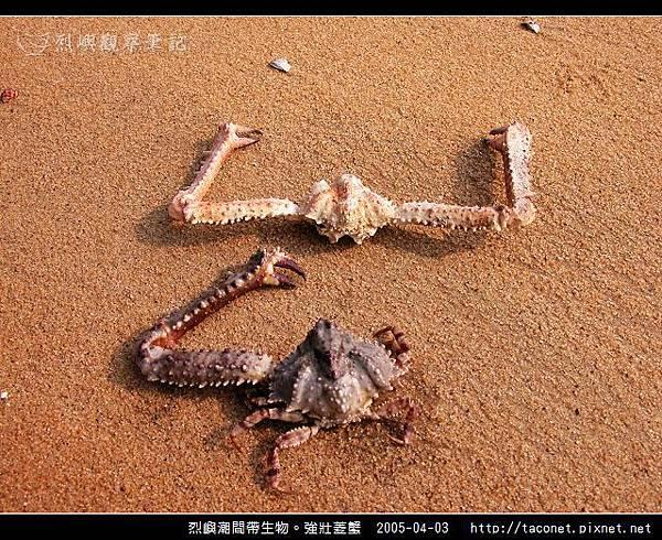強壯菱蟹_08.jpg
