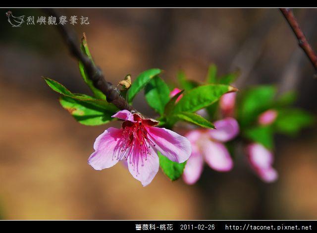 薔薇科-桃花_08.jpg