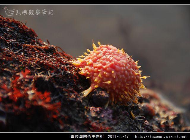 潮間帶生物_22.jpg