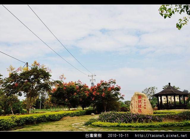 台灣欒樹_07.jpg