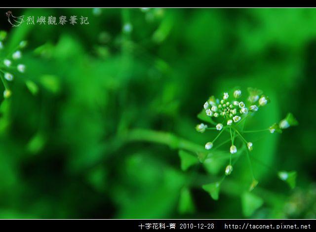 十字花科-薺_01.jpg
