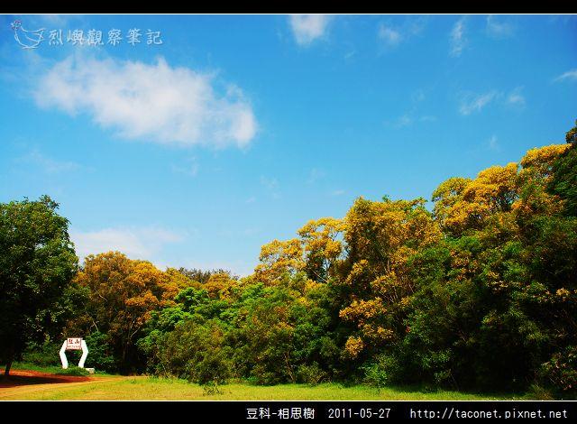 豆科-相思樹_08.jpg