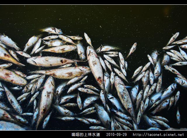 上林水道之死_13.jpg
