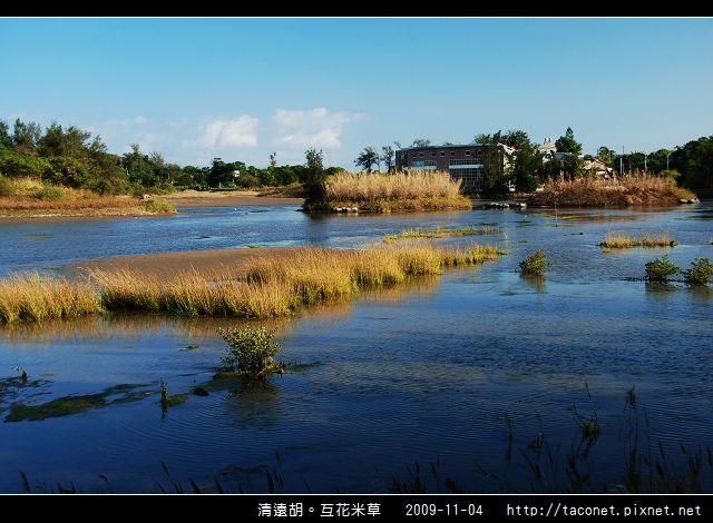 互花米草在清遠湖_07.jpg
