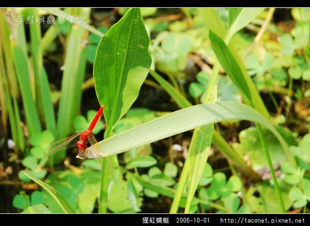 猩紅蜻蜓_05.jpg