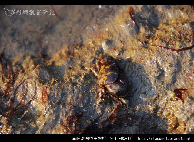 潮間帶生物_24.jpg
